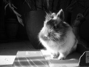 loulou lapin concours photo animaux decembre 2016