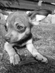 luna chien concours photo animaux decembre 2016