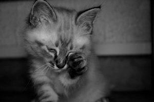 mia chat concours photo animaux decembre 2016