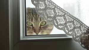 tamara chat concours photo animaux decembre 2016