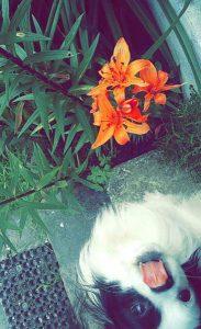 zak chien concours photo animaux decembre 2016