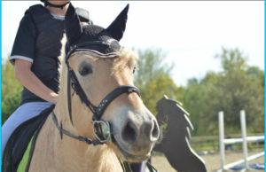 aldo cheval concours photo animaux janvier 2017