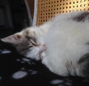 cat action chat concours photo animaux janvier 2017