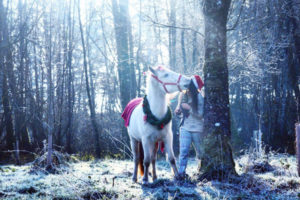 falya cheval concours photo animaux janvier 2017