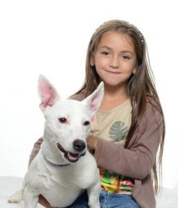 gold chien concours photo animaux janvier 2017