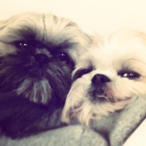 joy mousse chiens concours photo animaux janvier 2017