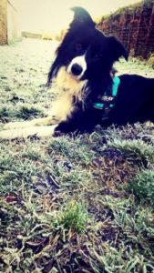 louky chien concours photo animaux janvier 2017