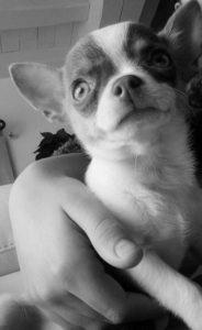 mao chien concours photo animaux janvier 2017