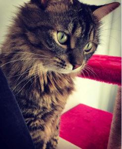 mimi chat concours photo animaux janvier 2017