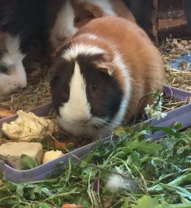 noisette rongeur concours photo animaux janvier 2017