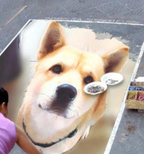 tayson chien concours photo animaux janvier 2017