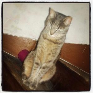 tutlle chat concours photo animaux janvier 2017