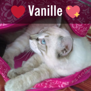 vanille chat concours photo animaux janvier 2017