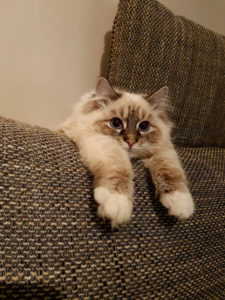 zelda chat concours photo animaux janvier 2017
