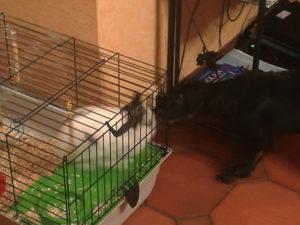 chouchou monroe lapin-chien-concours photo animaux fevrier 2017