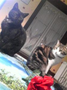 mario boule de poil chats concours photo animaux fevrier 2017
