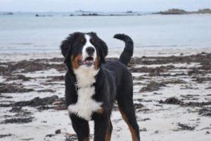 maïko chien concours photo animaux mars 2017