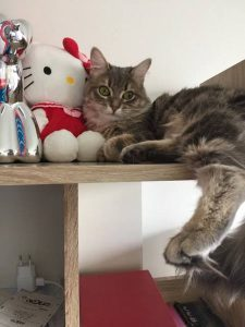 choukette chat concours photo animaux avril 2017