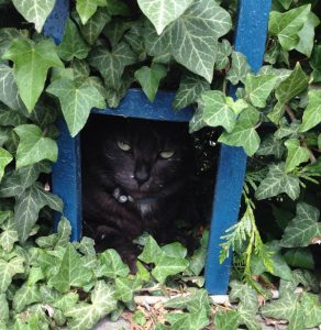 boule de poil chat concours photo animaux chat 2017