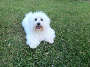lilou chien concours photo animaux mai 2017