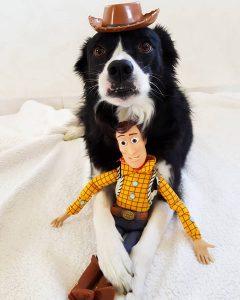 ficelle chien concours photo animaux juin 2017