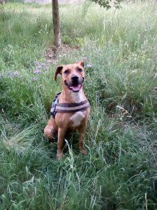 hava chien concours photo animaux juin 2017