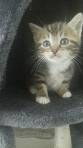 minette chaton concours photo animaux juin 2017