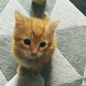 nine chaton concours photo animaux juin 2017