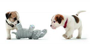 Jouets pour animaux - chiens-jouet-chiots-hunter-peluche-doudou