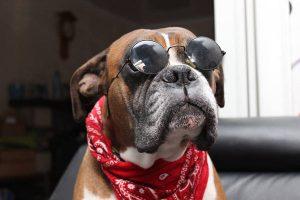 brutus chien concours photo animaux juillet 2017