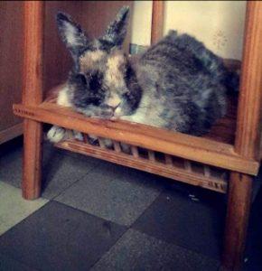 calinou lapin concours photo animaux juillet 2017