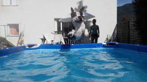 even-chien-concours-photo-animaux-juillet-2017