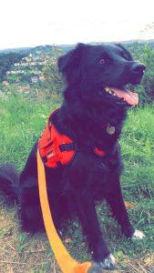 jason chien concours photo animaux juillet 2017