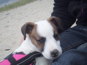 nouga chien concours photo animaux juillet 2017