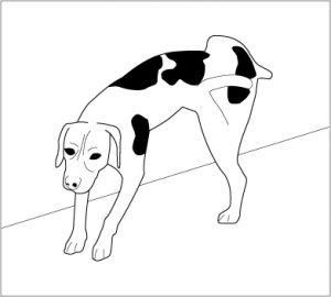 comment repousser un chien qui urine