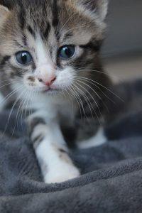 tache chaton concours photo animaux juillet 2017