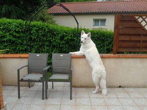 jackson chien concours photo animaux aout 2017