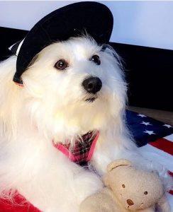 belle chien concours photo animaux septembre 2017