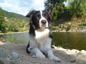 crunch chien concours photo animaux septembre 2017