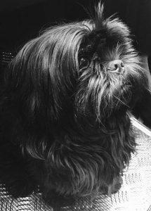 hitch chien concours photo animaux septembre 2017