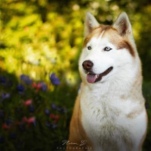 ishka chien concours photo animaux septembre 2017