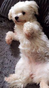 jessy chien concours photo animaux septembre 2017