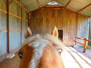 goldfinger cheval concours photo animaux octobre 2017