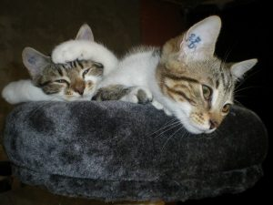 kitty et lizette chats concours photo animaux octobre 2017