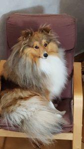letsie chien concours photo animaux octobre 2017