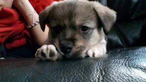 luna chien concours photo animaux octobre 2017
