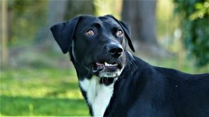 max chien concours photo animaux octobre 2017