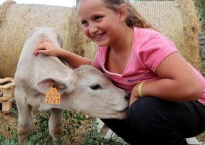 mimi vache concours photo animaux octobre 2017