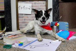 moka chien concours photo animaux octobre 2017