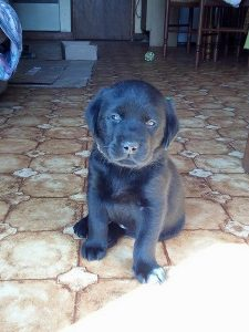 neruda chien concours photo animaux octobre 2017